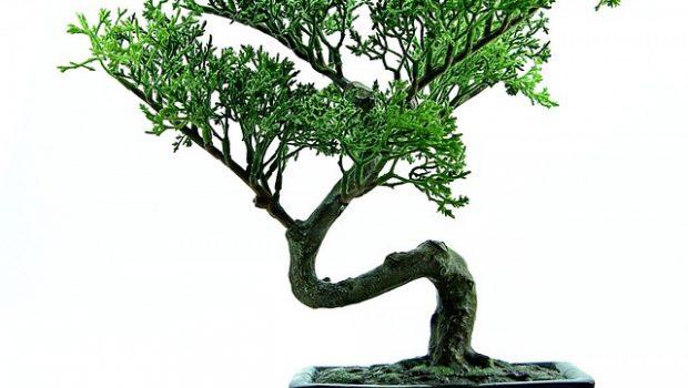 צמחי אוויר – מתנה לחג המושלמת